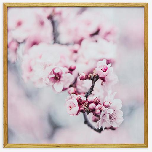 Quadro Pink Blossom I
