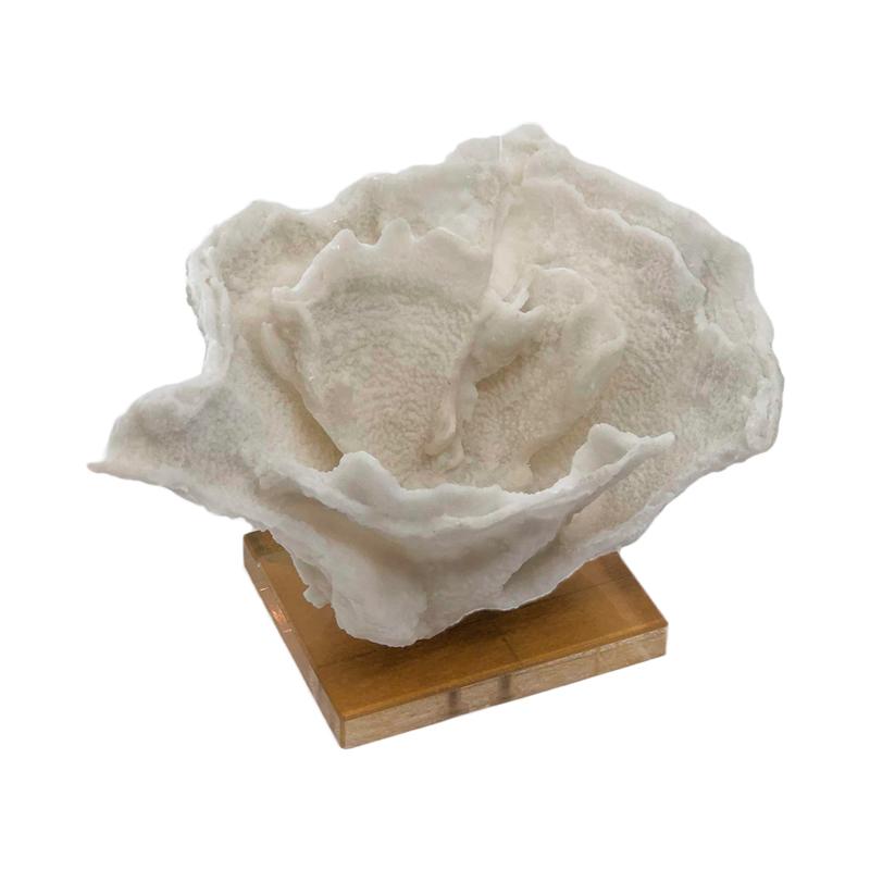 Coral decorativo branco